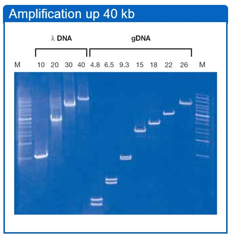 5 Prime PCR Extender System 1