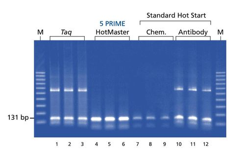 5 prime hotmaster taq dna polymerase 1